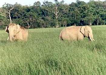 rajaji-national-park-namaste-dehradun